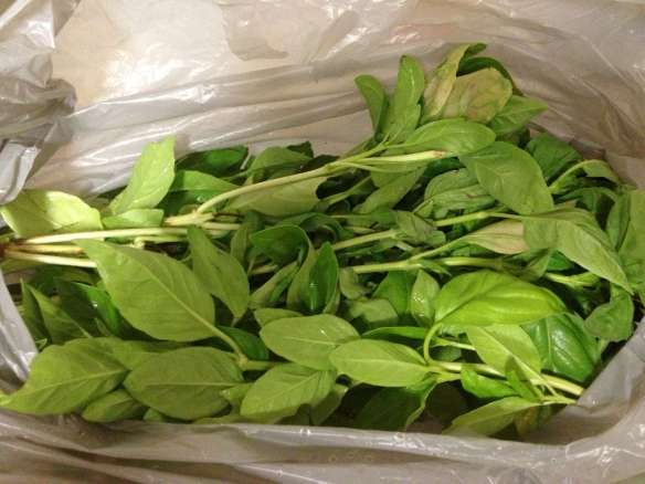 a bag of basil-2000