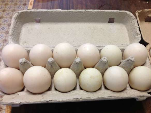 duck eggs-2000